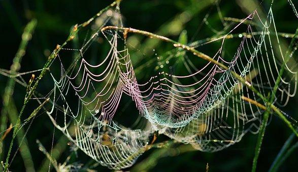 Cobweb, Morning Sun, Color, Dewdrop, Macro, Close Up