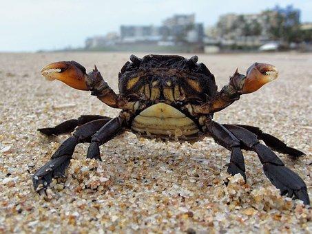 Crab, Sealife, Crabby, Beach, Aquatic, Sea, Animal