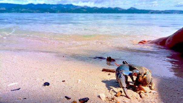 Crustacean, Sea Animal, Shell Type, Pet, Aqua Animals