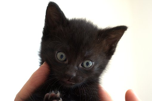 Cat, Kitten, Black, Cute, Eyes, Domestic Cat