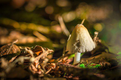 Mushroom, Forest, Macro, Nature, Moss, Discovered