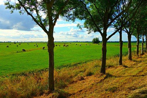 Field, Horizon, Sky, Tree, Panorama, Rural, Polder