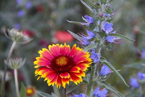 Flowers, Garden, Field, Petals, Flora, Bloom, Colorful