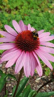 Purple, Flower, Summer, Bumblebee, Green, Beautiful