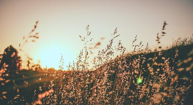 Field, Flowers, Rod, Sun, Sunset, Nature, Flower