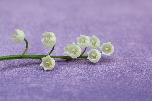 Thrush, Flowers, May 1, Spring, White, Perfume, Garden