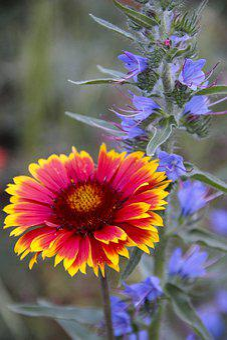 Flowers, Field, Garden, Nature, Bloom, Spring, Flora