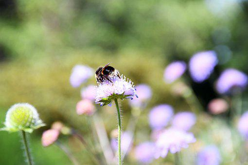 Bee, Nature, Flower, Honey, Fly, Animal, Bumblebee
