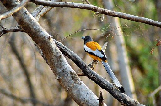 Bird, Wildlife, Forest, Nature, Animal, Natural