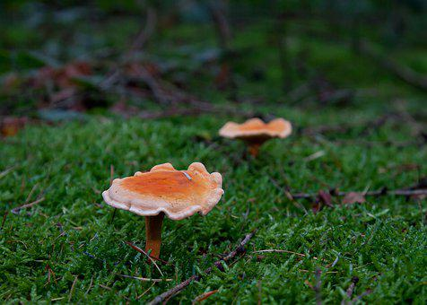 Mushrooms, Duo, Green, Orange, Forest, Forest Mushroom