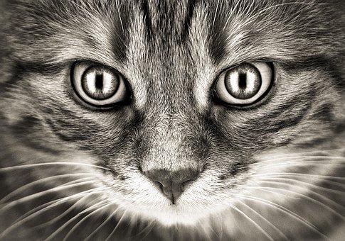 Bad Look, Cat, Mackerel, Eyes, Funny, Pet, Domestic Cat