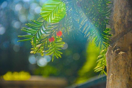 Green, Red, Nature, Summer, Garden, Leaf, Orange
