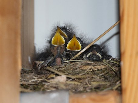 Child, Birds, Baby, Nest, Bill, Fluff, Hay, Family
