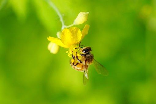 Flower, Nature, Bee, Green, Summer, Wird, Honey