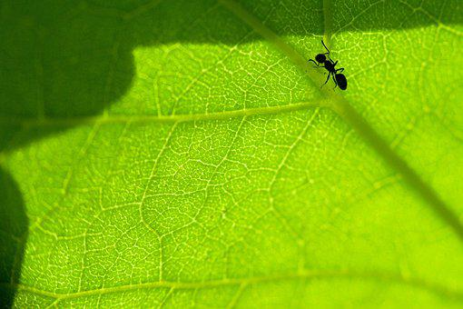Macro, More Closely, Sheet, Sun, Ant, Insect, Nature