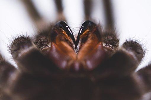 Birdman, Spider, Helicyry, Jaws, Hair, Arthropods
