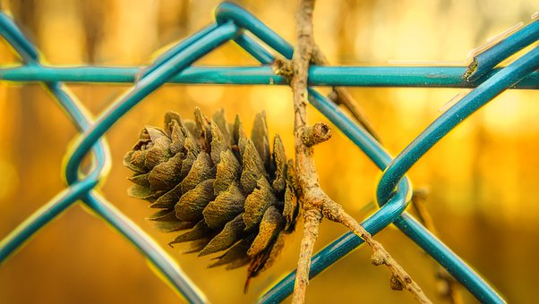 Fence, Tap, Pine Cones, Forest, Nature, Close Up, Macro