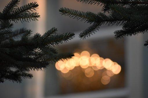 Tree, Lights, Nature, Landscape, Forest, Mood, Mystical