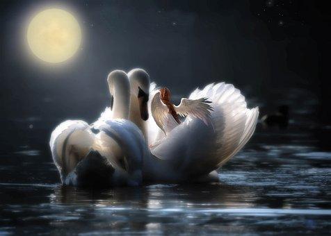 Fantasy, Swan, Night, Moon, Magic, Angel, Light