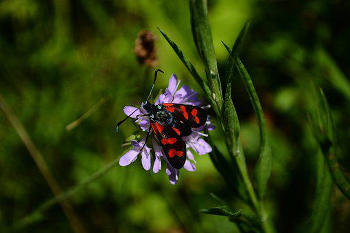 Papillion, Insect, Nature, Grass, Green, Black, Red