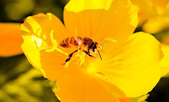Bee, Flower, Plants, Insects, Spring, Pollen, Garden