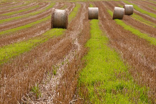 Straw Bales, Round Bales, Straw, Harvest, Harvested