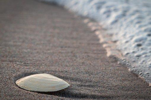 Beach, Shell, Concerns, Sand, Spray, Sea, Landscape