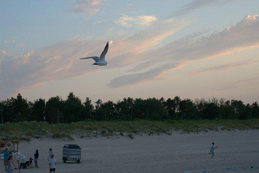 Seagull, Beach, Sunset, Summer, Sky, Sand, Vacations