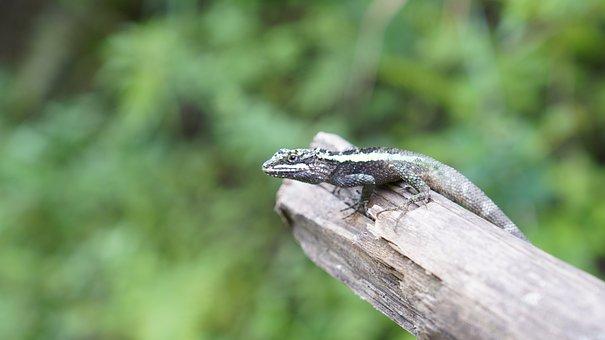 Lizard, Outdoor, Green, The Wild