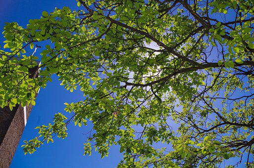 Tree, Sky, Nature, Green, Leaf, Branch, Forest, Spring