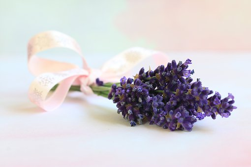 Lavender, Flower, Nature, Violet, Provence, Purple