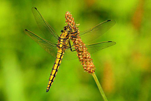 Dragonfly, Insect, Animal, Wing, Body, Stem, Biology