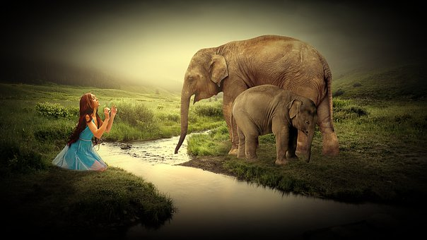 Girl, Woman, Human, Person, Elephant, Animals, Bach
