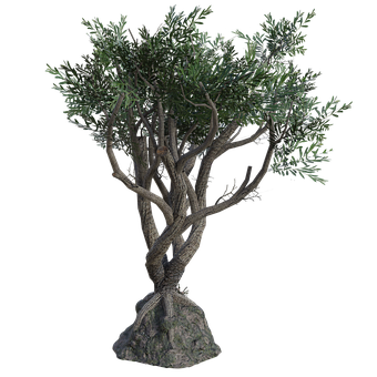 Twisted Tree, Branches, Leaves, Trunk, 3d, Render