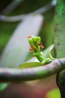 Tanzania, Zanzibar, Africa, Nature, Environment, Summer