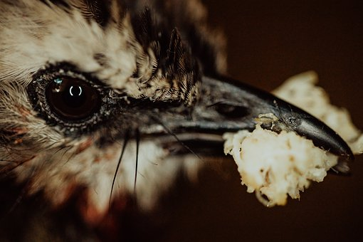 Bird, Eat, Little, Animal, Nature, Cute, Eating