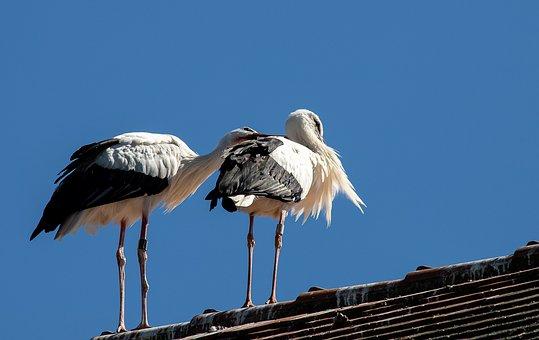 Stork, Bird, Storks, Animal, Animal World, Nature