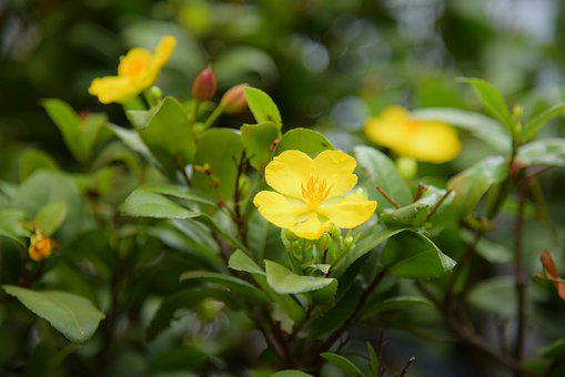 Apricot Blossom, Nature, Garden, Plant, Green, Yellow