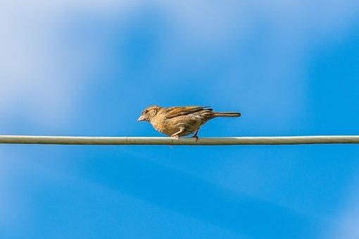 Sparrow, Birds, Plumage, Nature, Feathers, Birdie, Sky