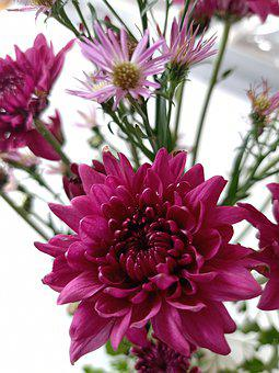 Flower, Pink, Spring, Blossom, Summer, Flora, Tender
