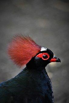 Zoo, Emmen, Bird, Colorful, Pretty, Toll, Chicken, Wild