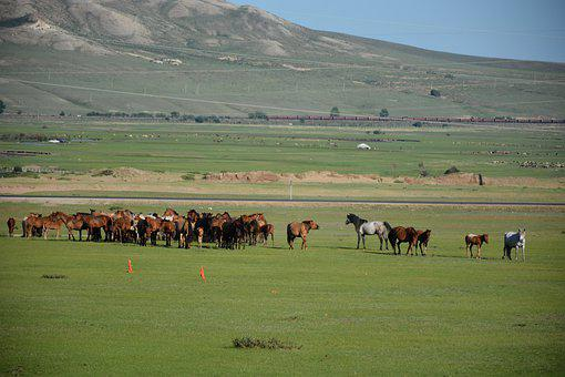Horses, Countryside, Livestock