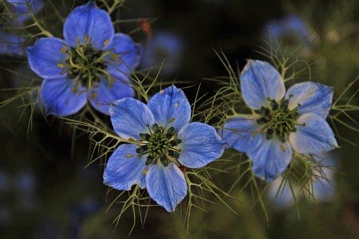 Czarnuszka, Three, Flora, The Maiden In Green, Summer