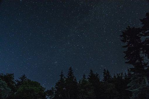 Stars, Forest, Night, Dark, Sky, Nature, Trees