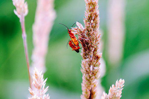 Insect, Pairing, Reproduction, Fauna, Nature, Pair
