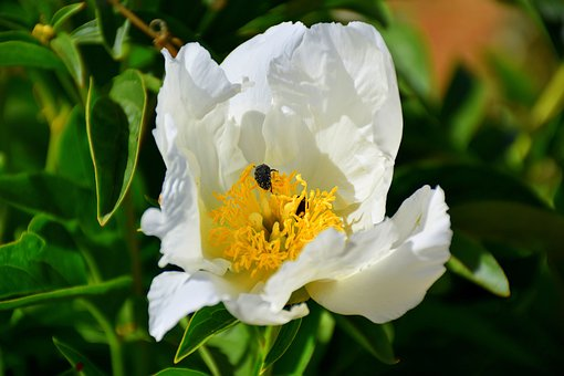 Flower, Insect, Bee, Nature, Simple, Nectar, Spring