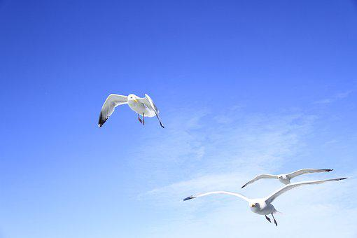 Birds, Flying, Sky, Wing, Seagull, Gulls, Sea, Fly