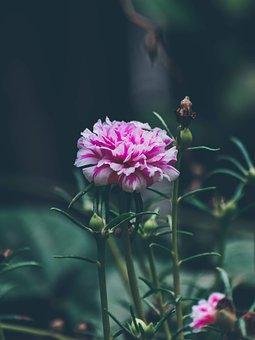 Flowers, Home Garden, Garden, Nature, Spring