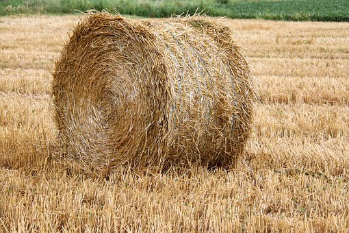 Haystack, Wheat, Field, Agriculture, Hay, Summer