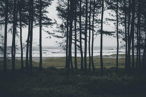 Forest, Sea, Landscape, Nature, Water, Snow, Trees